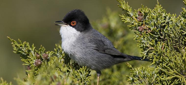 Seminario Online sobre los 25 años del proyecto SACRE de SEO/BirdLife. 29/04/2021.